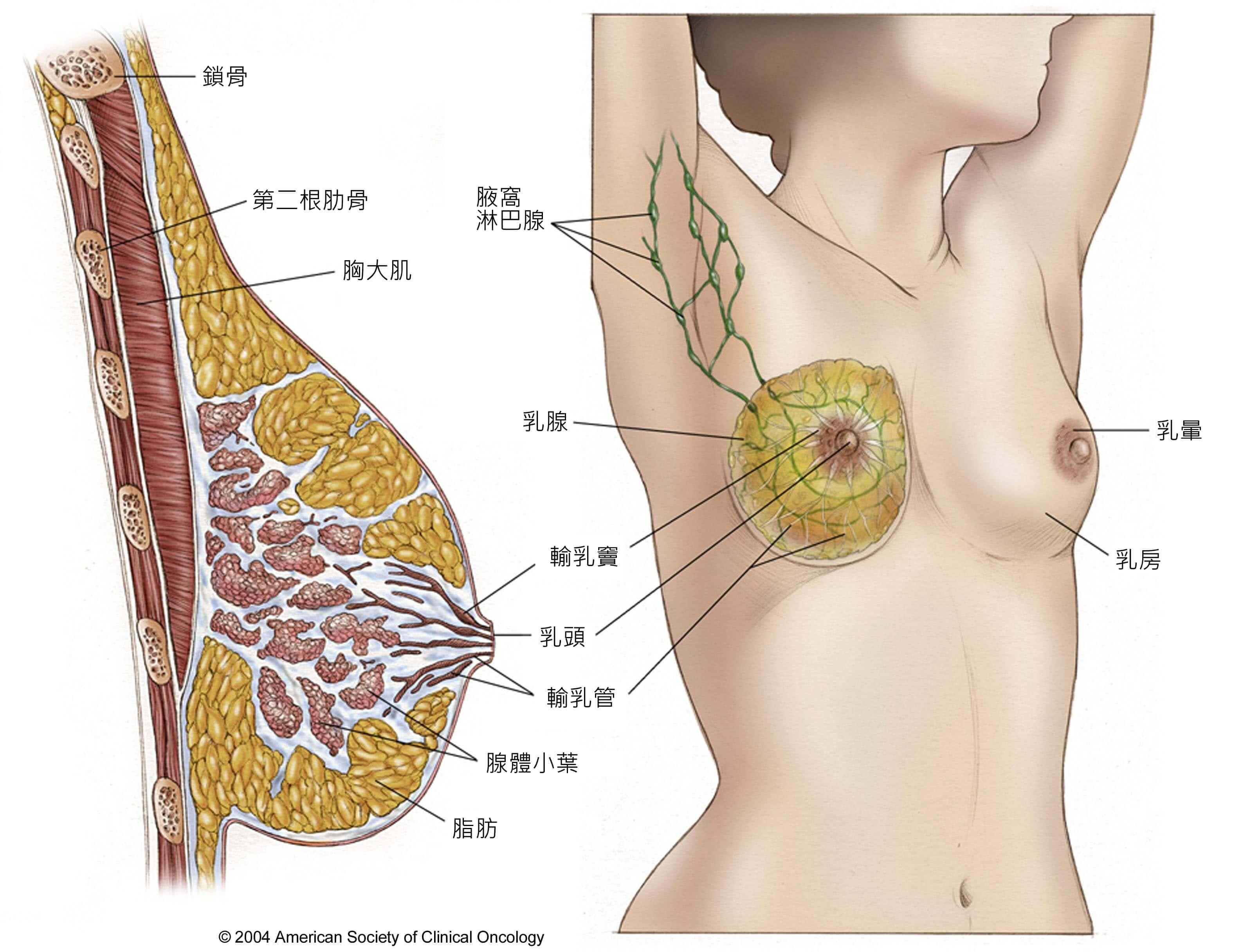 乳頭 腫 喉頭